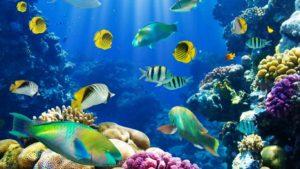 6-hikkaduwa-coral-reef